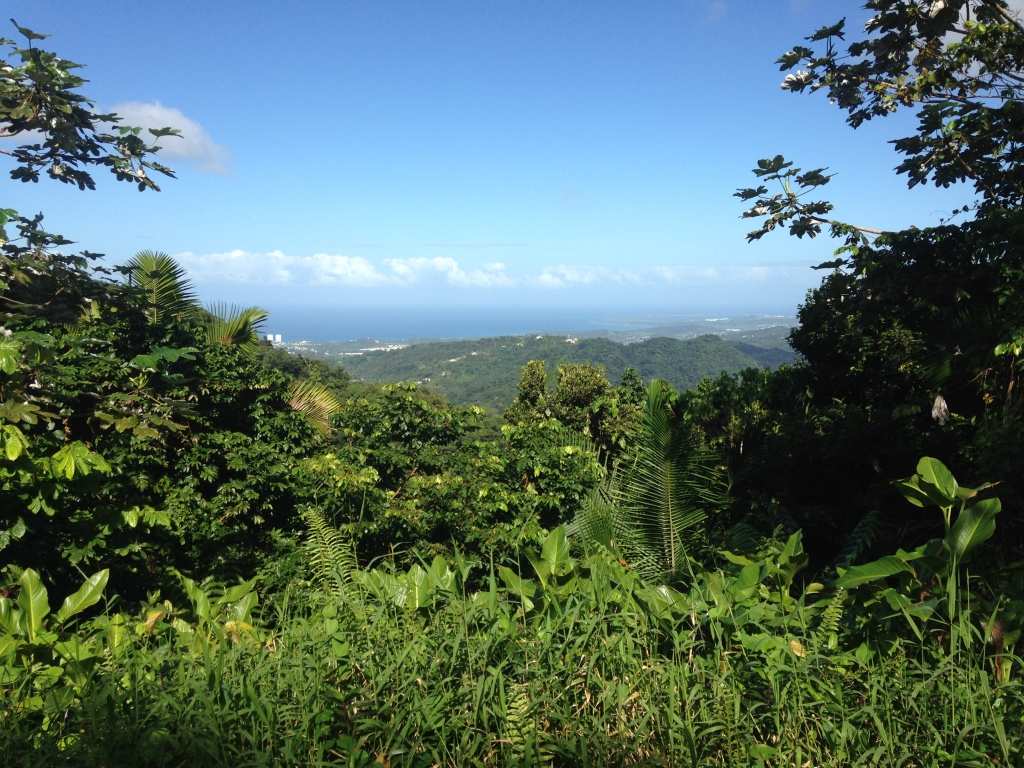 The view from the El Yunque National Rain Forest.